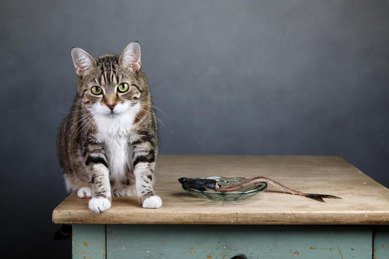ученые рассказали домашние кошки отказываются еды