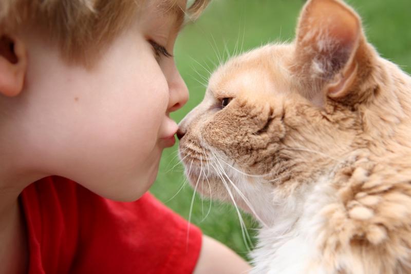 исследование кошки предпочитают еде общение людьми