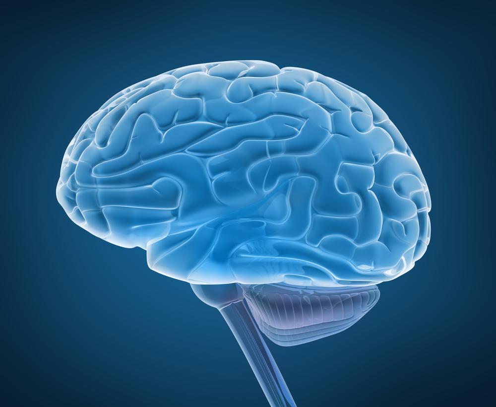 ученые склонности перееданию виноват мозг