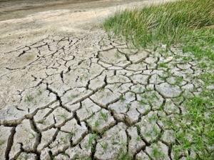 Ученые предупредили о неожиданном последствии климатических изменений